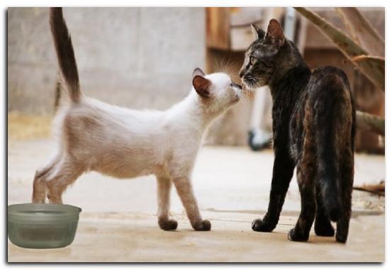 Как правильно кормить котенка